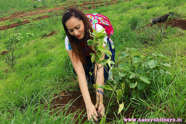 Tree Plantation Drive With Samsonite